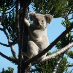 Australie : Magnetic Island