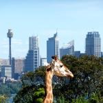Australie : Quelques jours à Sydney