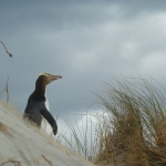 Nouvelle-Zélande : Otago Peninsula