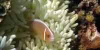 Pulau Seraya : Snorkeling paradiase